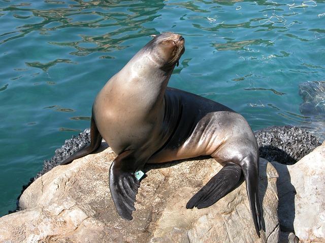 Imgenes de focas  FOCAPEDIA